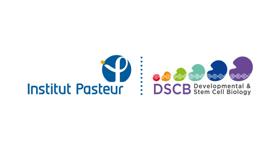Création du logo DSCB (Developmental & Stem Cell Biology - Institut Pasteur